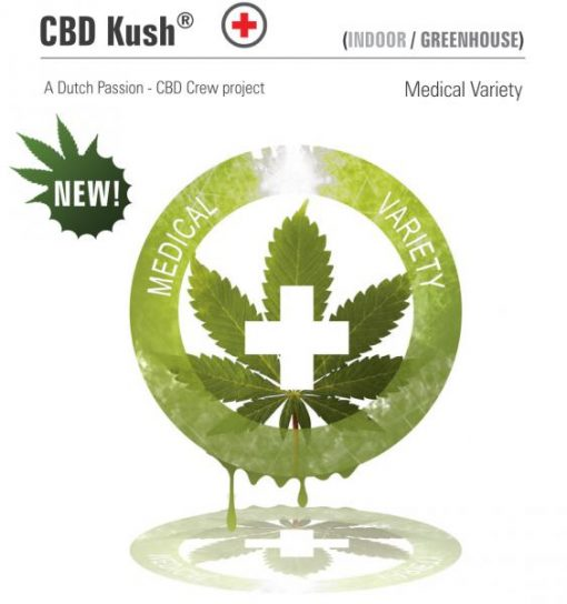 CBD Kush Feminised Seeds